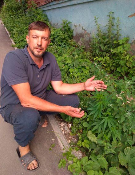 Статьи по выращиванию конопли марихуана давление повышает или понижает давление