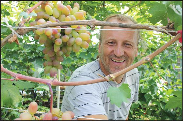 виноград в ульяновске на рыбацком