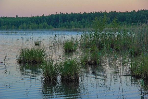 Озеро Грачевское (пос Свободное)