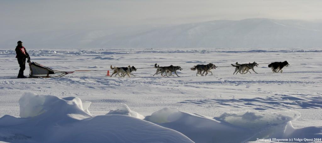 "international sled dog race ""Volga Quest "".Day 1."