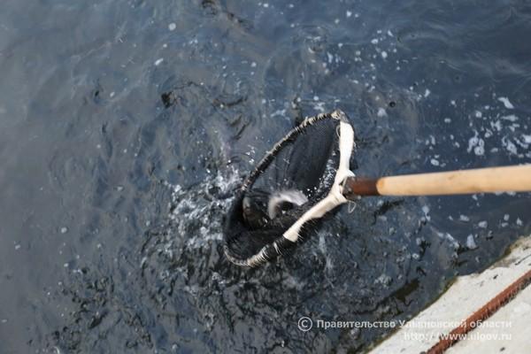 ловля амура в октябре на что ловить
