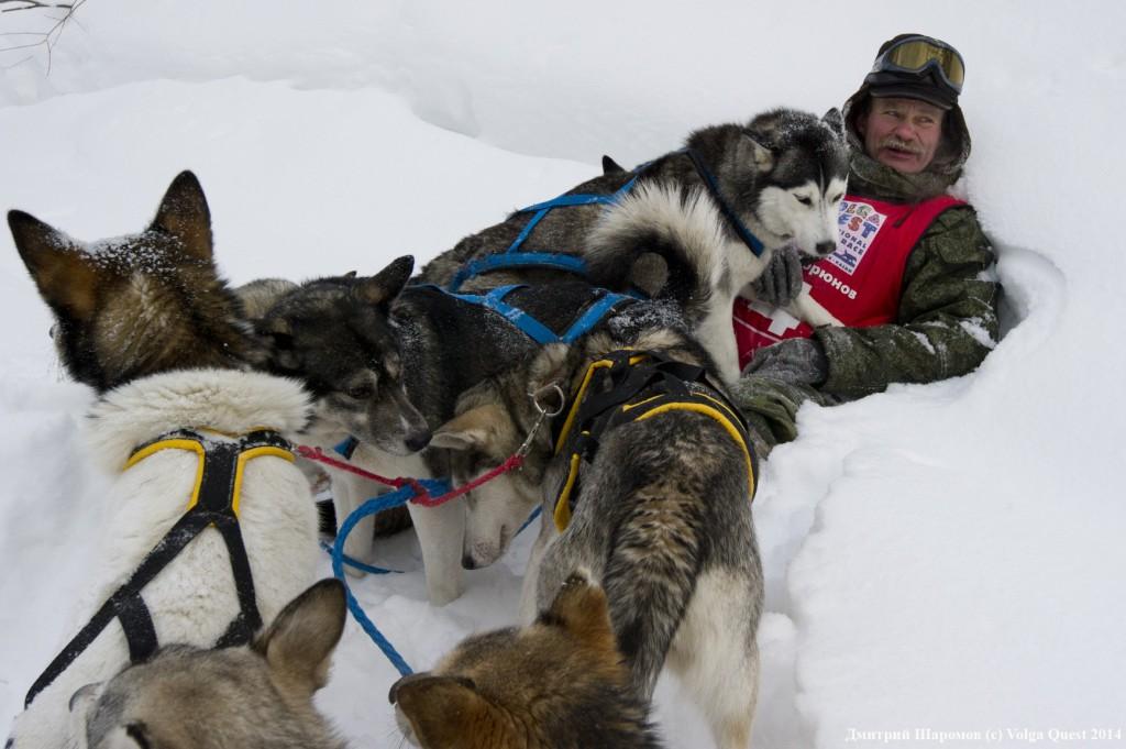 "international sled dog race ""Volga Quest "".day2. From Toliatii to Kazan."