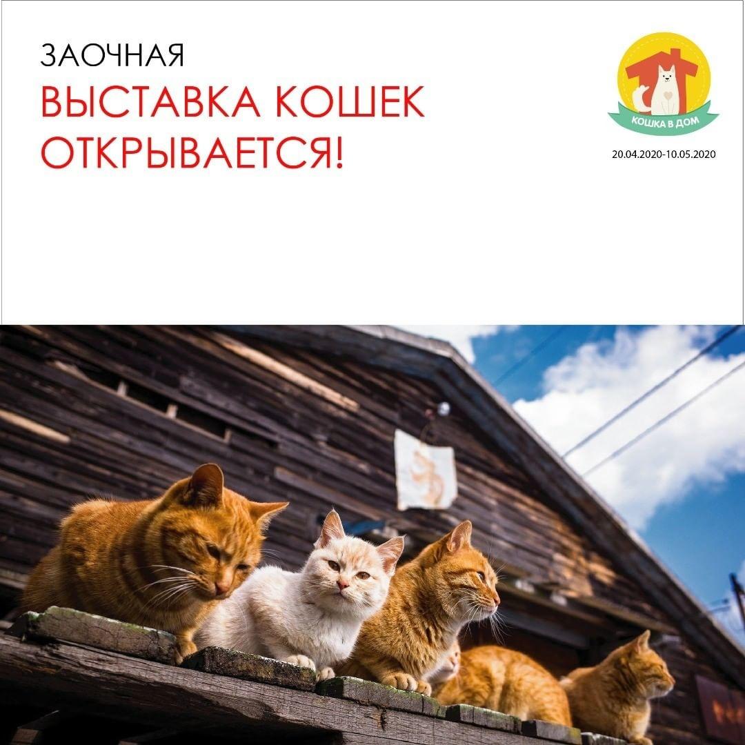Онлайн-выставка кошек