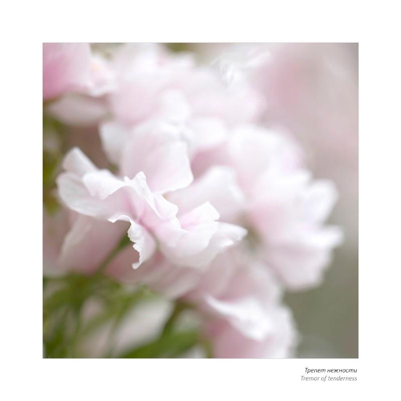 Персональная выставка члена Союза фотохудожников России Натальи Беленцовой «Вдохновение цветов. Краски новой жизни» @ во Дворце книги