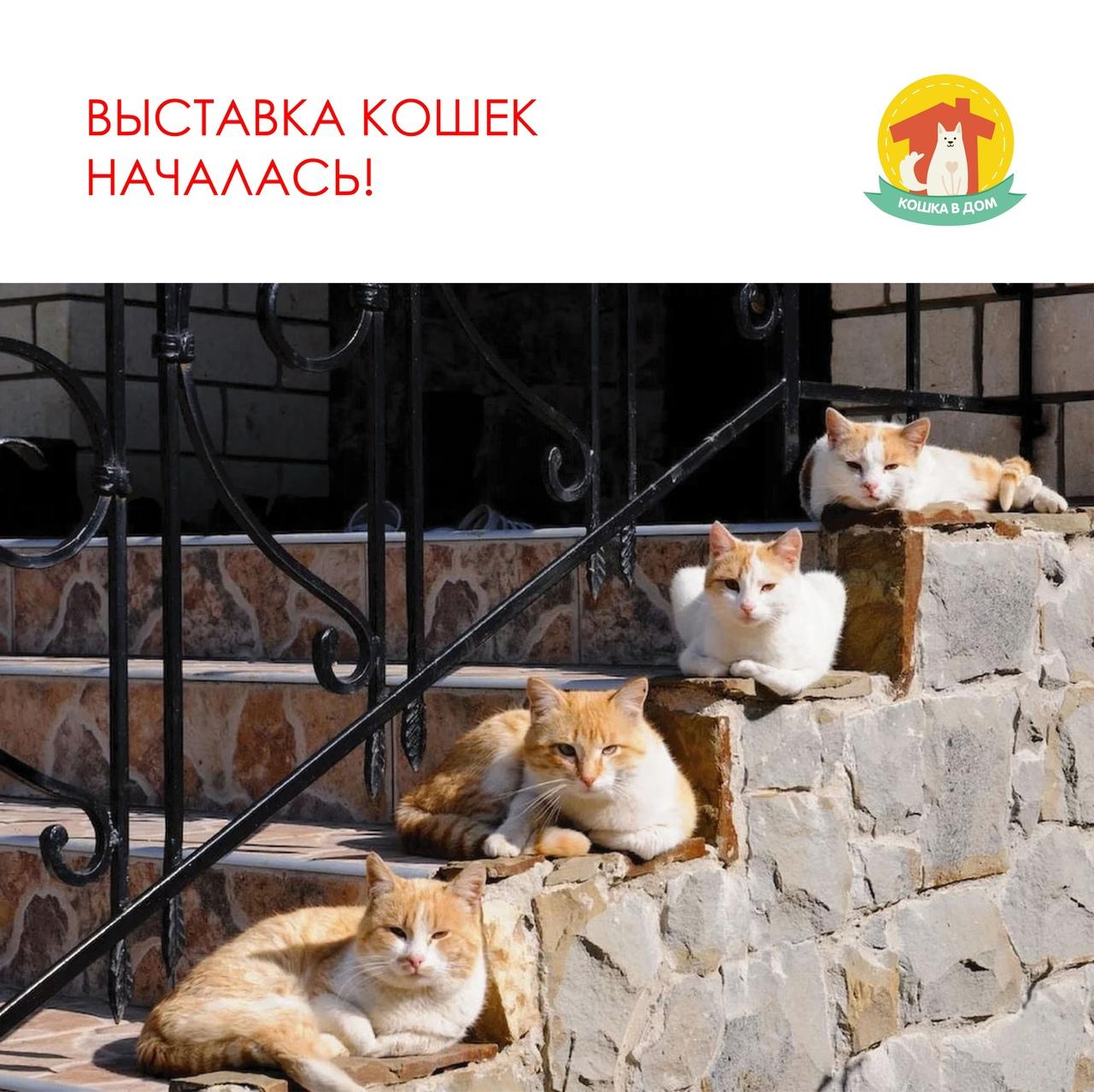8-я онлайн-выставка кошек «КОШКА В ДОМ»