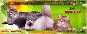 Международная выставка кошек @ ТЦ Атмосфера, Авиастроителей проспект 12 а