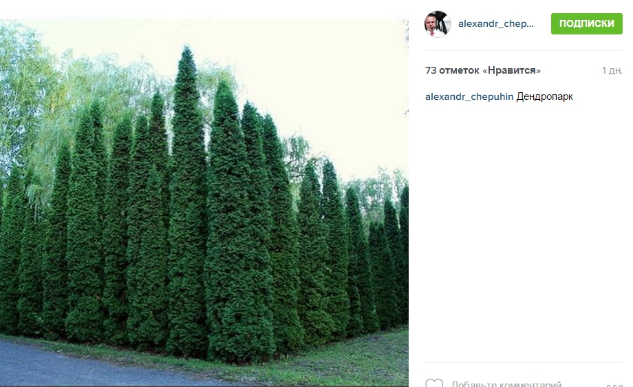 Александр Чепухин выуа Instagram «Дендропарк» - Google Chrome
