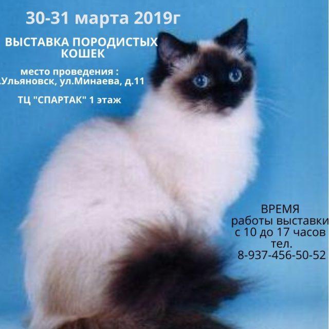 Международная выставка кошек «25 лет МФА» @ ТЦ Спартак (ул Минаева 11)