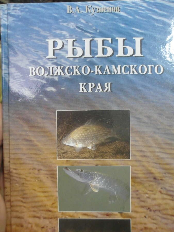 волжская рыба каталог с фото схема