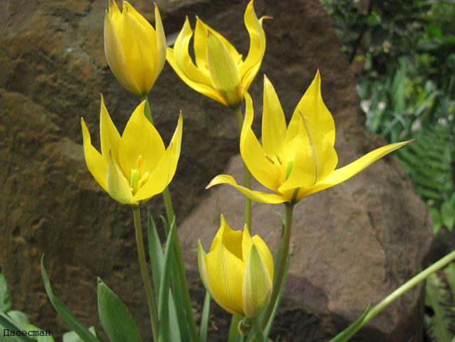 Весенние первоцветы-1