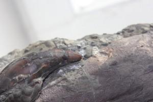 Открытие выставки одного экспоната «Новый плиозавр Makhaira rossica» @ Ульяновский областной краеведческий музей имени И.А.Гончарова