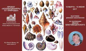 Камерная выставка раковин брюхоногих моллюсков @ Ульяновский областной краеведческий музей (бульвар Новый Венец, 3/4)