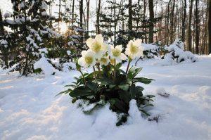 Городской проект «Среди зимы раскроются цветы», в рамках Добровольного Экологического года @ Зал филиала ОГБУК «Ульяновский областной музей «Дом Языковых» (улица Спасская, д.22)