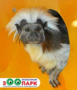 Выставка экзотических животных Необычный зООпарк @ ТЦ Атмосфера, пр-т Авиастроителей, 12а