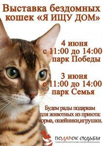 """Выставка бездомных кошек """"Я ищу дом"""" @ Парк «Семья»"""