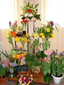 Выставка садовых и декоративных растений @ Дворец «Губернаторский»