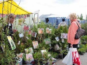 Садоводческие мини-ярмарки @ на площадке возле ТЦ «Пушкарёвское кольцо» (ул. Московское шоссе, д. 91)